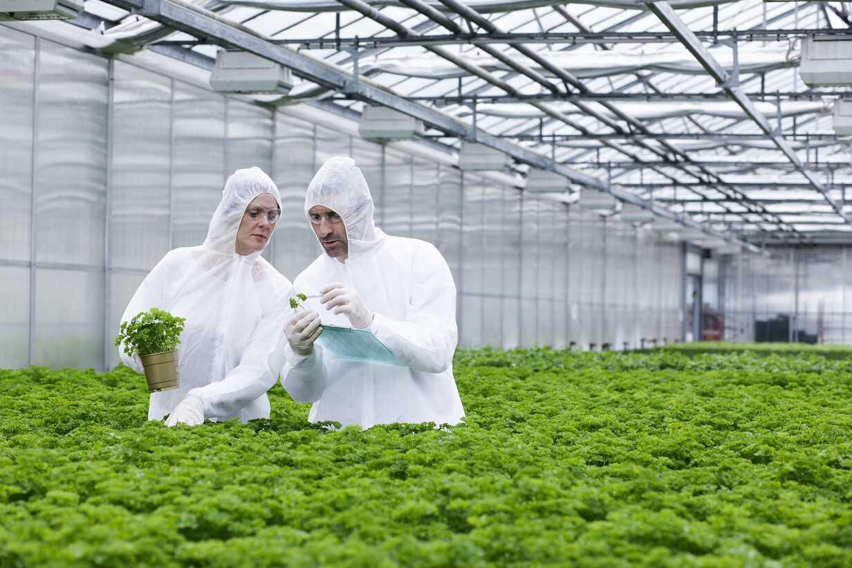 Germany, Bavaria, Munich, Scientists in greenhouse examining parsley plant - RREF000033 - Rik Rey/Westend61