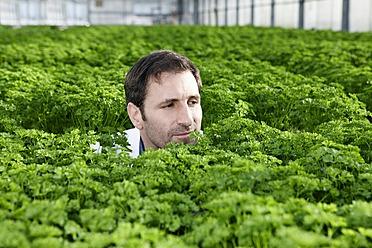 Germany, Bavaria, Munich, Mature man in greenhouse between parsley plants - RREF000060