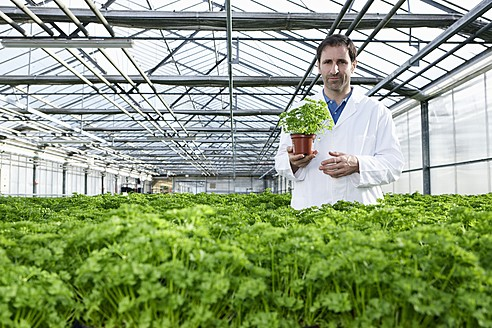 Germany, Bavaria, Munich, Scientist standing between parsley plant in greenhouse - RREF000062