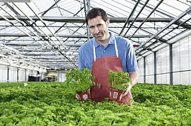 Germany, Bavaria, Munich, Mature man in greenhouse between parsley plants - RREF000064