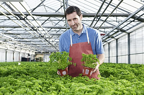 Germany, Bavaria, Munich, Mature man in greenhouse between parsley plants - RREF000064