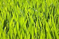 Germany, Close up of green grass - CPF000004