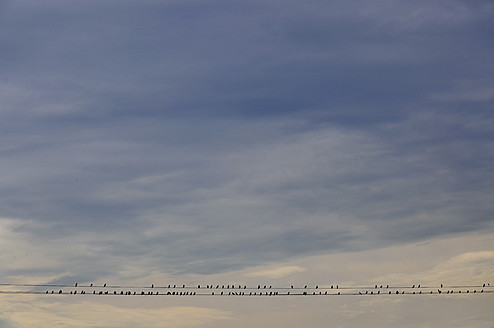 Germany, Bavaria, Munich, Flock of birds perching on power lines - AXF000337