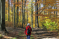 Germany, Saxony, Mature woman walking in beech forest - JTF000167