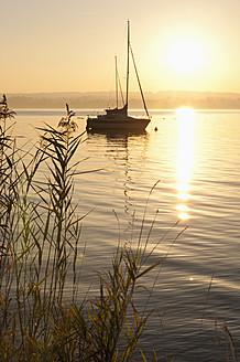 Germany, Bavaria, Sailing boat on Lake Ammersee, reed in foreground - UMF000526