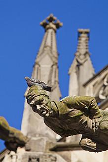 Germany, Baden Wuerttemberg, Schwabisch Gmund, Gargoyle at Heilig Kreuz Cathedral - WDF001293