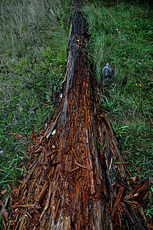 Germany, Bavaria, Weathered tree trunk - AXF000351
