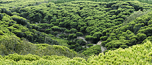 Portugal, View of pine forest - WVF000252