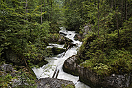 Austria, Upper Austria, Walbach creek near Hallstatt - SIEF003019