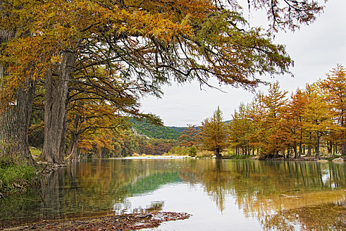 USA, Texas, Cypress tree with golden leaves in Frio River - ABAF000367