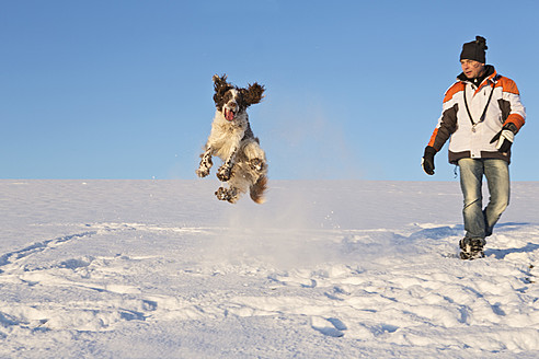 Germany, Bavaria, English Springer Spaniel and dog owner playing in snow - MAEF005441