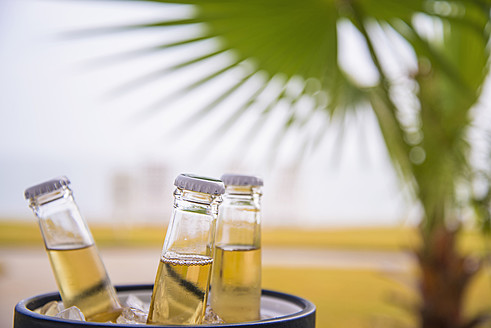 USA, Texas, Beer bottles in ice bucket in front of palm tree leaf - ABAF000586