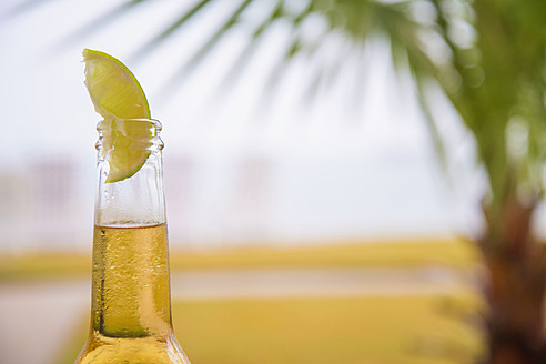 USA, Texas, Beer bottles with slice of lime in front of palm tree leaf - ABAF000588
