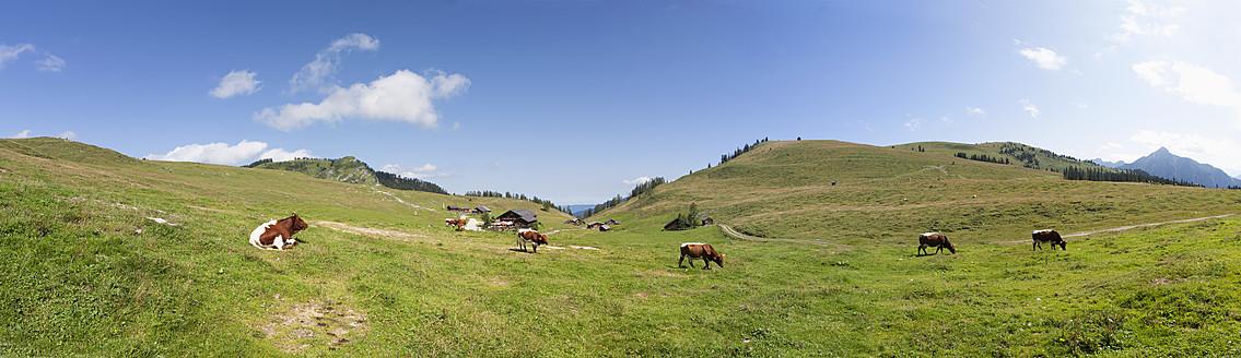 Austria, View of cow grazing on alp pasture at Postalm - WWF002600