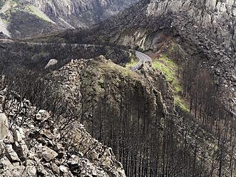 Spain, La Gomera, Fire damage in Garajonay National Park - SIE003113