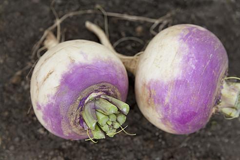 Germany, Bavaria, Freshly harvested turnip - TCF003220