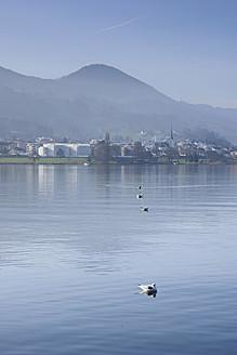 Switzerland, Seagulls on Lake Zurich - HLF000037