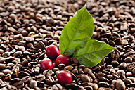 Fresh and roasted coffee beans with leaf, close up - CSF016246