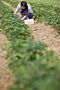 Germany, Bavaria, Young Japanese woman picking fresh strawberries in strawberry field - FLF000199