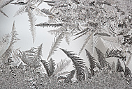 Austria, Window covered with  Ice crystal, close up - WWF002627