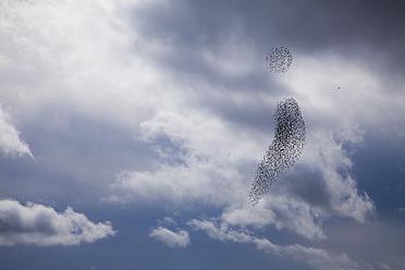 Germany, Wuerzburg, birds against cloudy sky - NDF000308