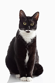 Black and white cat on white background, close up - CSF016624
