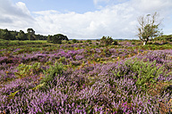 England, Hampshire, View of New Forest National Park - WDF001510
