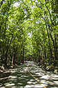 Philippines, Bohol, View of empty road - MBEF000541