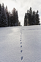 Germany, Bavaria, Animal track in snow at Bavarian Forest - FOF004841