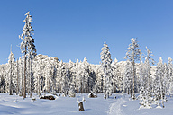 Germany, Bavaria, Track to mountain Grosser Arber  at Bavarian Forest - FOF004845