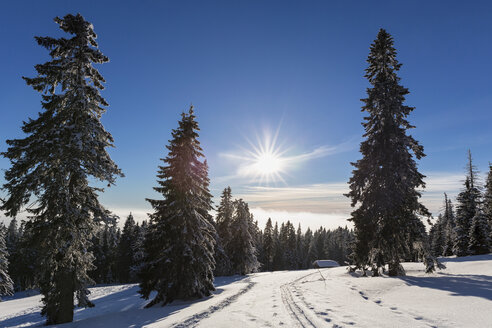 Germany, Bavaria, Snowy wooden hut and trees at Bavarian Forest - FOF004849