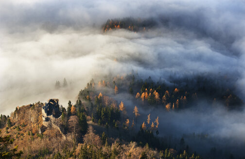 Austria, Salzkammergut, Trees covered with fog - WW002699