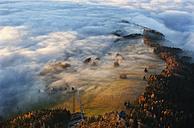 Austria, Salzkammergut, Trees covered with fog - WW002705