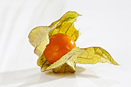 Physalis on white background, close up - CSF017440