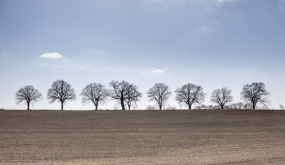Germany, Mecklenburg Vorpommern, Trees in field during spring - ATAF000013