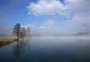 Austria, View of trees in morning fog at Mondsee Lake - WW002751