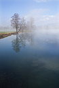 Austria, View of trees in morning fog at Mondsee Lake - WW002753