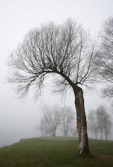 Austria, View of trees in morning fog at Mondsee - WW002764