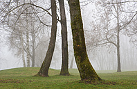 Austria, View of trees in morning fog at Mondsee - WW002774