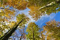 Germany, Baden Wuerttemberg, Deciduous trees against sky - WDF001624