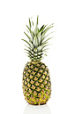 Pineapple against white background, close up - MAEF006092