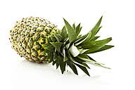 Pineapple against white background, close up - MAEF006094