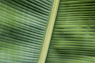 Spain, Canary Islands, Leaf of banana plant - DISF000009