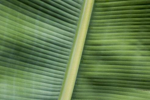 Spain, Canary Islands, Leaf of banana plant - DISF000009
