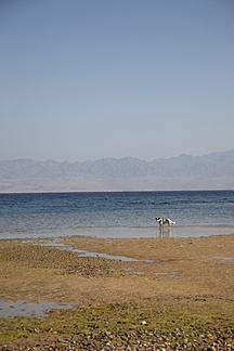 Egypt Dog At Beach Tk000090 Teka Westend61
