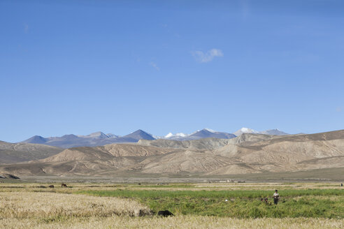 Tibet, Tibetan Plateau, Settlement, Field work in autumn - ATA000018