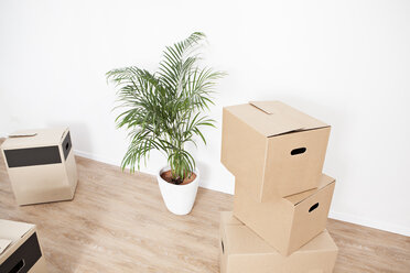 Cardboard boxes and plant pot on floor - FMKF000579