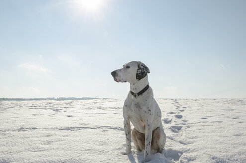 Germany, North Rhine Westphalia, Mixed breed dog sitting in snow - ONF000023