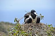 Ecuador, Seabird nesting on grass - ON000051
