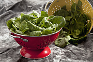 Spinach leafs in red and yellow colander - CSF018079